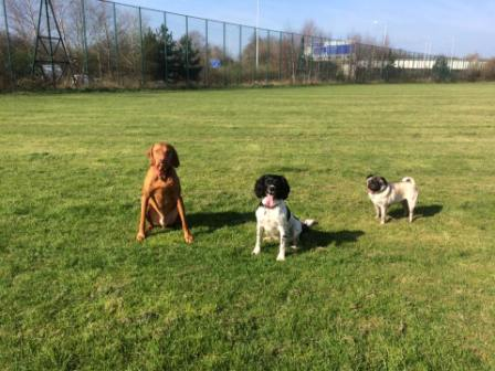 group dog walks in Wythenshawe