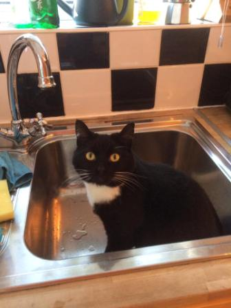 funny-cat-sitting-in-a-sink