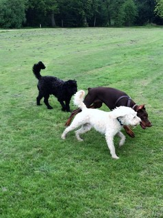 Dog Sitter in South Manchester