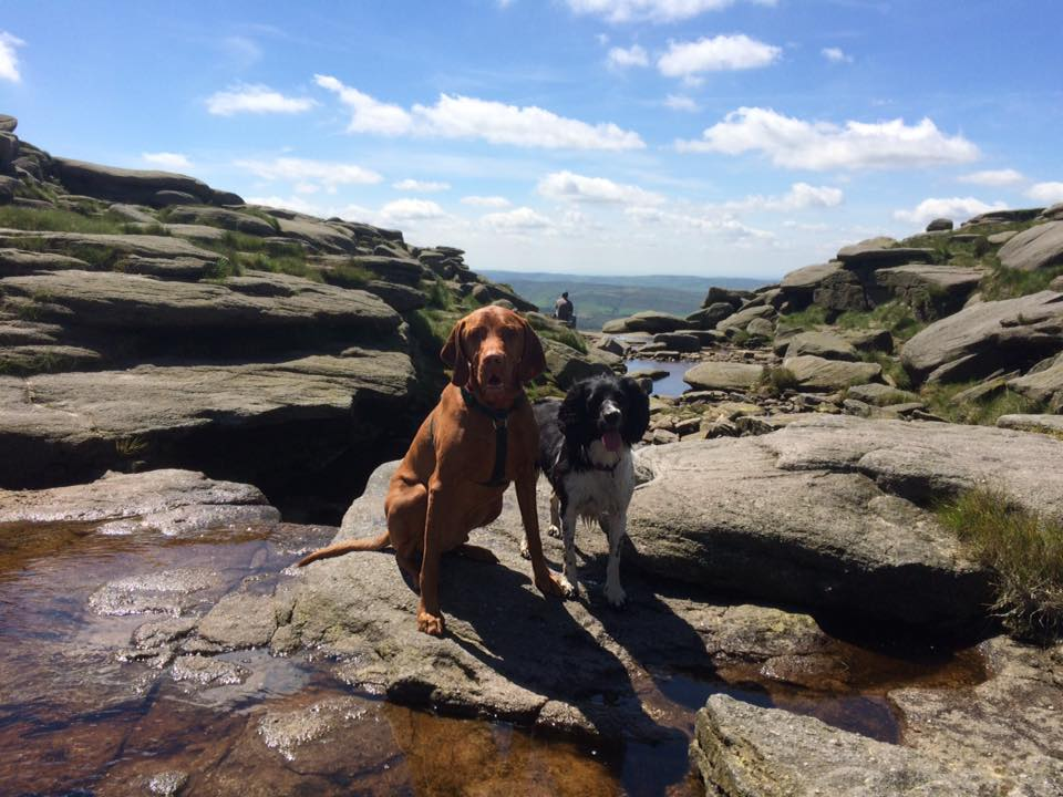 dog walking at kinder scout
