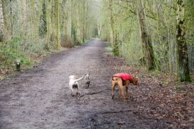 dog walk in the woods