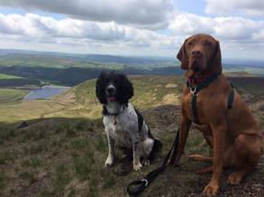 dog walking in the Peak District