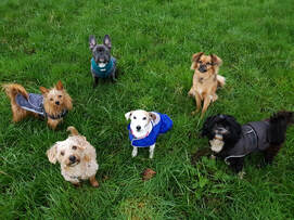 Group Dog Walking