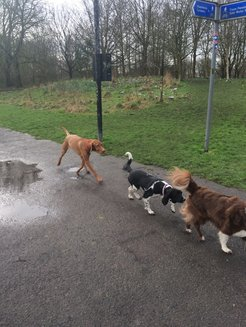 group dog walk in Chorlton